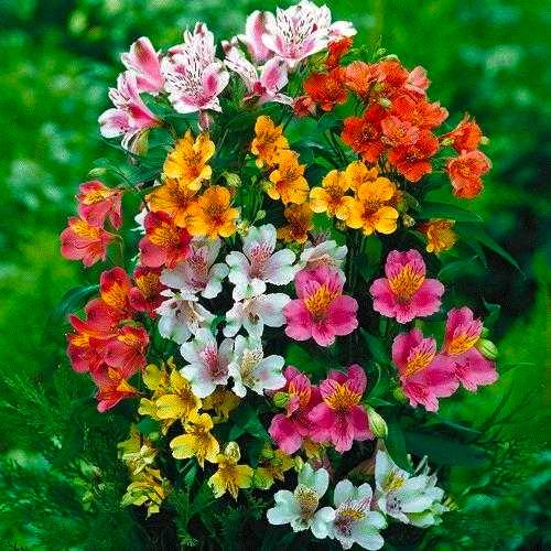 1 Dozen Long Stem Red Roses with Bear & Godiva® - VASE INCLUDED.